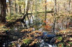 Experimental forest, Hokkaido university (threepinner) Tags: water flow tomakomai hokkaido japan autumn northernjapan pentax mzm pentaxm 28mm f35 positive iso100 selfdeveloped daytime      trees forest pond