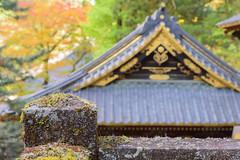 moss (katahai) Tags: moss shintoshrine nikko toshogu shrine nikon d750 autumnleaves
