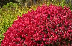 (careth@2012) Tags: leaves fall autumn nature scene scenery