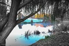 River Nene (norm.edwards) Tags: frost november rivernene nene thrapston blue blackandwhite graduated vignette tree scenery bluest black white wow cool