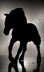 Horse (Rajavardan) Tags: nikon5200 nikor nikon dslr 1855mm black blackhorse blackandwhite horse photography photo natgeophotography natgeo backlight animals bockeh backlighting experiment dark zoom
