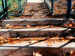 1 with Stairs and Mush (Mertonian) Tags: stairs walkingwithsophia partofmyjourney lunchwalk mertonian robertcowlishaw canon powershot g7x mark ii canonpowershotg7xmarkii excercise autumn fall mush decay damp cement concrete shadows path leaves