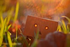 Autumn Danbo (RolandHut) Tags: autumn fall danbo solarflare flare grass orange green revoltechdanbo revoltech nikon d5100 nikond5100 flektogon