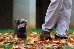 play with me (Jon Zazpe) Tags: dog dogs perros pets pet natural autumn play juego mascotas otoo outdoor exteriores horizontal tele canon 7d light