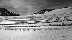 161169  Skiers on the Dachstein glacier (bellodis) Tags: dariobellodisphotography crosscountryskier mountainlandscapes 2016 alpi alps bw dachstein fujifilmgear fujixt2 horizontalformat ramsau fujinon35f2 ghiacciaio glacier montagna mountain neve people persone sciatori snow wwwbellodiscom