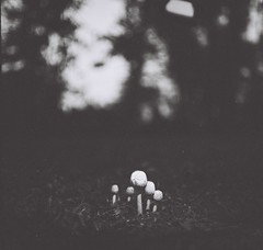 Cendawan (Ifitis) Tags: light blackandwhite white black 120 film vintage mediumformat mushrooms southeastasia bokeh malaysia medium p6 pentaconsix czj