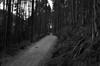 Road To Nowhere.. (Stephen Whittaker) Tags: white black blur forest mono blackwhite nikon path d5100 whitto27