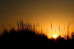 Sunset in the Dunes (mendaman) Tags: sun france beach grass set la grande south motte