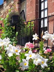 Collonges la rouge (LILI 296 ...) Tags: france fleur rouge pierre t maison mur fentre jardinire collongeslarouge villagedefrance canonpowershotg12