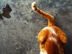 ekor si muck (PieceOfMindArt) Tags: animal cat nikon coolpix s3000