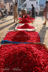 Flower market, A09A4818 (Nadeem Khawar.) Tags: pakistan punjab lahore nadeemkhawar flowermarkeet