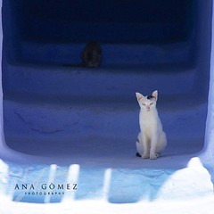 IMG_2279 (Mr Hiro) Tags: blue cats colour azul gatos morocco chaouen chefchaouen marruecos