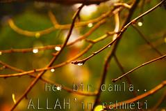 Rαhʍet ღ (gLySuNfLoWeR) Tags: su allah yeşil damla yağmur rahmet islamiyet