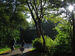 Autumn play with light (lis north) Tags: autumn trees light fall bicycle groen foliage winner fiets bladeren dutchbikes bosjesvanpex
