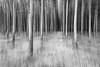 Poplar grove, OR (Jesse Estes) Tags: trees bw oregon poplargrove jesseestesphotography d800e