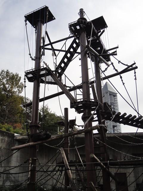 チンパンジータワー|名古屋市東山動植物園