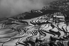 Rice Terrace in Yuanyang (Sijanto) Tags: mygearandme mygearandmepremium mygearandmebronze mygearandmesilver mygearandmegold mygearandmeplatinum mygearandmediamond l3pfrbwclassic