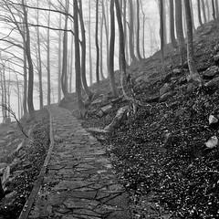 Dubium sapientiae initium. (Claudia Gaiotto) Tags: wood autumn trees monochrome fog forest silence nebbia sentiero brumes nebla