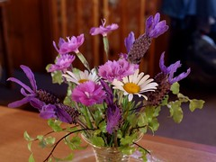 Simple gifts from the garden. (di off the wallaby) Tags: flowers daisies lavender australia tasmania dianthus coriander