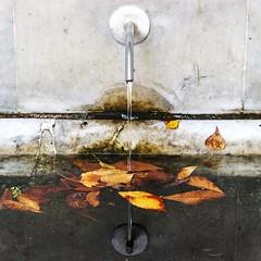 Reflections in November (ph ramaccioni monica) Tags: water fountain leaves foglie mirror novembre transparency acqua fontana fonte source specchio trasparenza riflettere riflessionidinovembre