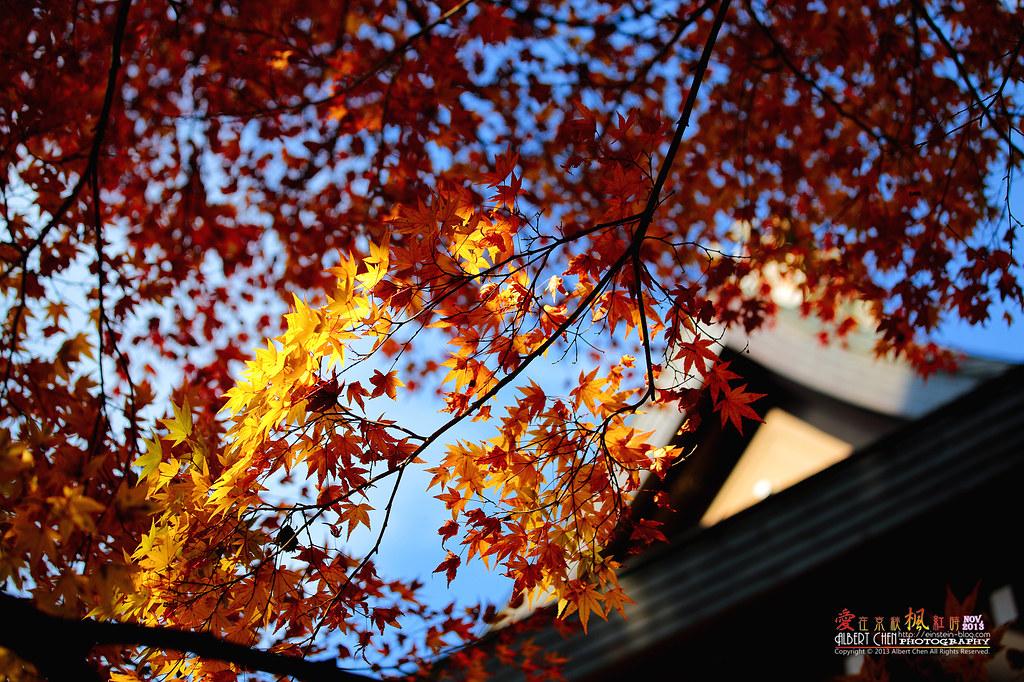 2013-11-21 12.20.34IMG_0060