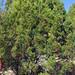 Trees_of_Loop_360_2013_117