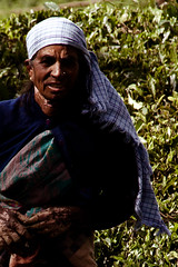 Tribal woman in Ooty 2