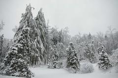 Snow & Ice