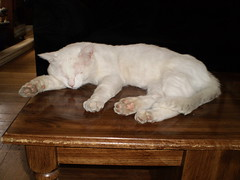 Mystic (universalcatfanatic) Tags: wood sleeping cats brown white reflection coffee cat table living wooden sleep room hard livingroom couch mystic lay hardwood laying