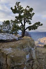Grand Canyon (Marcio Lambais) Tags: arizona nature nationalpark grandcanyon