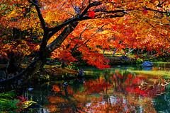 Autumn Colours in Kinkaku-ji (金閣寺) (どこでもいっしょ) Tags: fall japan 35mm reflections japanesegarden kyoto autumncolours momiji 京都 日本 紅葉 fullframe 金閣寺 kinkakuji rokuonji 鹿苑寺 templeofthegoldenpavilion sonydscrx1 sonycybershotrx1