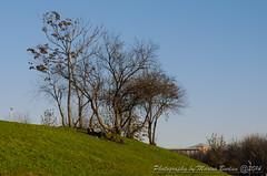 Enjoying the sun (Maryus B.) Tags: park trees winter people sun green nikon relaxing romania bucharest bucuresti iarba soare iarna copaci nikond5100