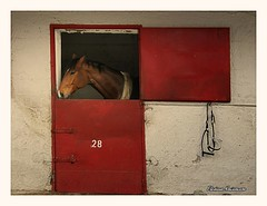 (Eleanna Kounoupa) Tags: red horses doors greece pallini       equestrianclubofathens