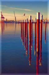 Ensenada Harbor (Artypixall) Tags: bird reflections mexico harbor cranes getty ensenada faa