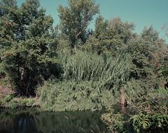 . (Andrs Medina) Tags: film nature rio analog spain 6x7 andresmedina