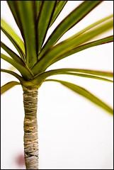 (Adisla) Tags: planta sony 7 mf f2 manual 40mm om zuiko nex