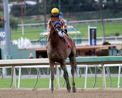 Candy Boy (kimpossible pics) Tags: horse racetrack jockey horseracing racehorse thoroughbred arcadia equine santaanita candyboy garystevens santaanitaracetrack johnsadler robertblewisstakes crkstable