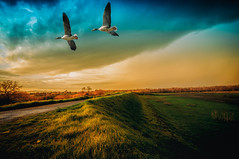 The flight of ducks (yui fan) Tags: volo campagna papere maremma 500px ifttt