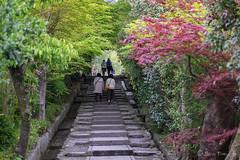 08_Kyoto Temple's Gardens-Japan-Series1-27frames_DSF2535 (Serge THELLIER) Tags: kyoto osaka avril japon 2014 sergethellier fujifilmxt1