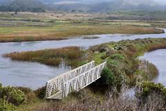 2013-09-15 09-22 Kalifornien 117 Pescadero Marsh Natural Preserve