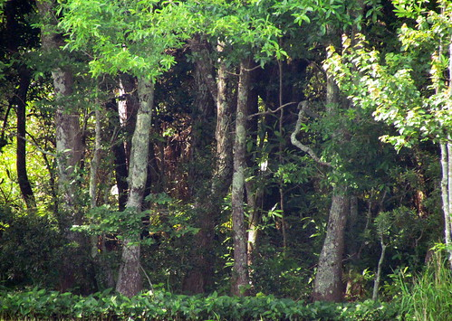 35 Trees Harkers Island NC 9809