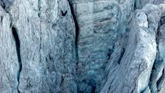 Steigletscher, Susten - Dohle im Gletscherabbruch (Sophia Drosophila) Tags: alpen alpinwandern berg berge eis felsen firn gebirge gestein gletscher kantonbern landschaft schweiz steingletscher susten weitwandern