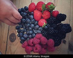 Photo accepted by Stockimo (vanya.bovajo) Tags: stockimo iphonegraphy iphone toddler eating red fruits hand holding blackberry strawberry strawberries raspberry raspberries blueberries fresh organic bio no gmo healthy food dessert kid children