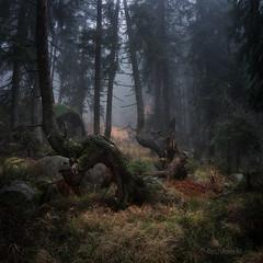In the mysterious wood (emil.rashkovski) Tags: forest wood tree trees light fog autumn nature mountain outdoor bulgaria mist mystery