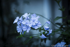 2016 10 02 - 063808 0 Canon EOS 5D Mark III (Illusion of light and shadow) Tags: canon eos 5dmarkiii ef100mmf28lmacroisusm lightblue blue silence aftertherain autumn obscurely depthoffield
