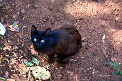 8 (reginatnia) Tags: loversphotos animais gatos felinos