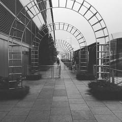 #Pathway (Mahantesh I. Biradar) Tags: instagramapp square squareformat iphoneography uploaded:by=instagram moon