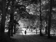 (sparth) Tags: olympus olympusem1 em1 sparth auvergne foret forest blackwhite blackandwhite bw noirblanc noiretblanc nb 2016 august france silhouette