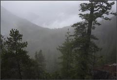 gondola forest1 (tesseract33) Tags: tesseract33 nikon light world art travel outdoors squamish nikond750 d750 peterlang squamishphotographers squamishgondola forest trees green peterlangphotographynet