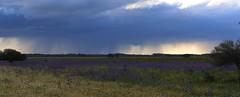 Rain & Wild Flowers (Teutonic01) Tags: newsouthwales hayplains wildflowers sturthighway storm rain spring
